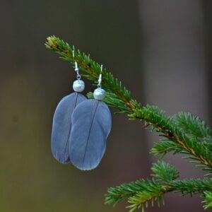 Salla Harju, sulkakorvakorut sepelkyyhky siniharmaa